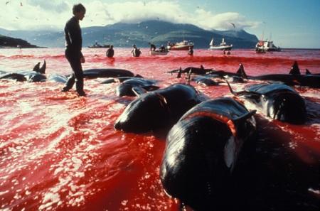 caza ballena